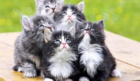 Oración por el gato