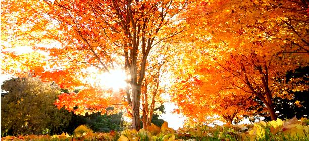 Salmo 127 - Oración La verdadera prosperidad - la Palabra de Dios para hoy