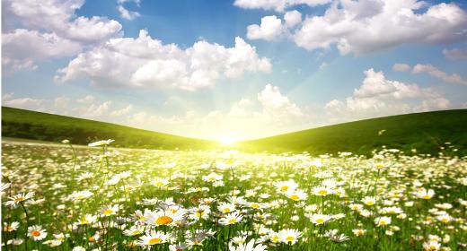 Salmo 5 - Oración de la mañana - la Palabra de Dios para hoy