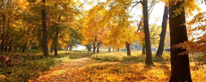 3839-lacny-jesen-stromy-les-park-zlta